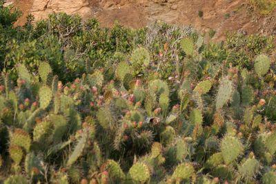 cactus-bg